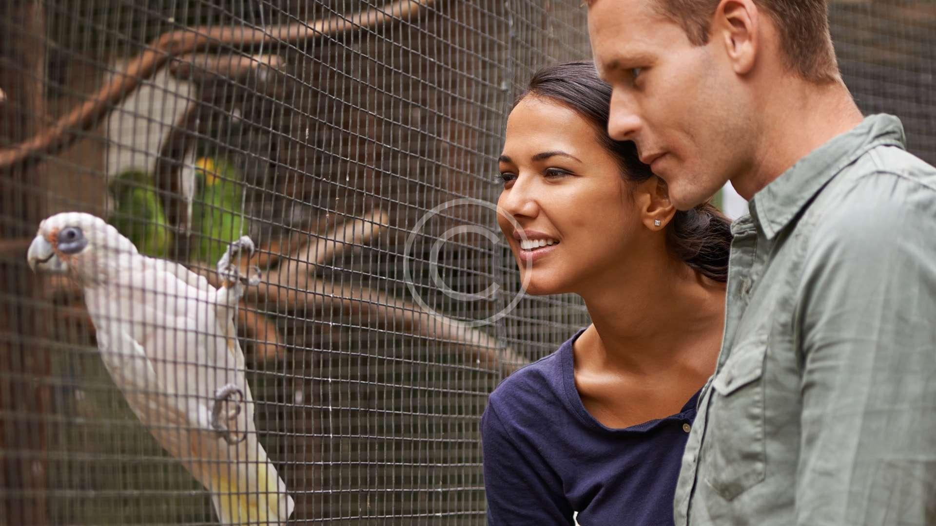 Mixed Bird Aviary