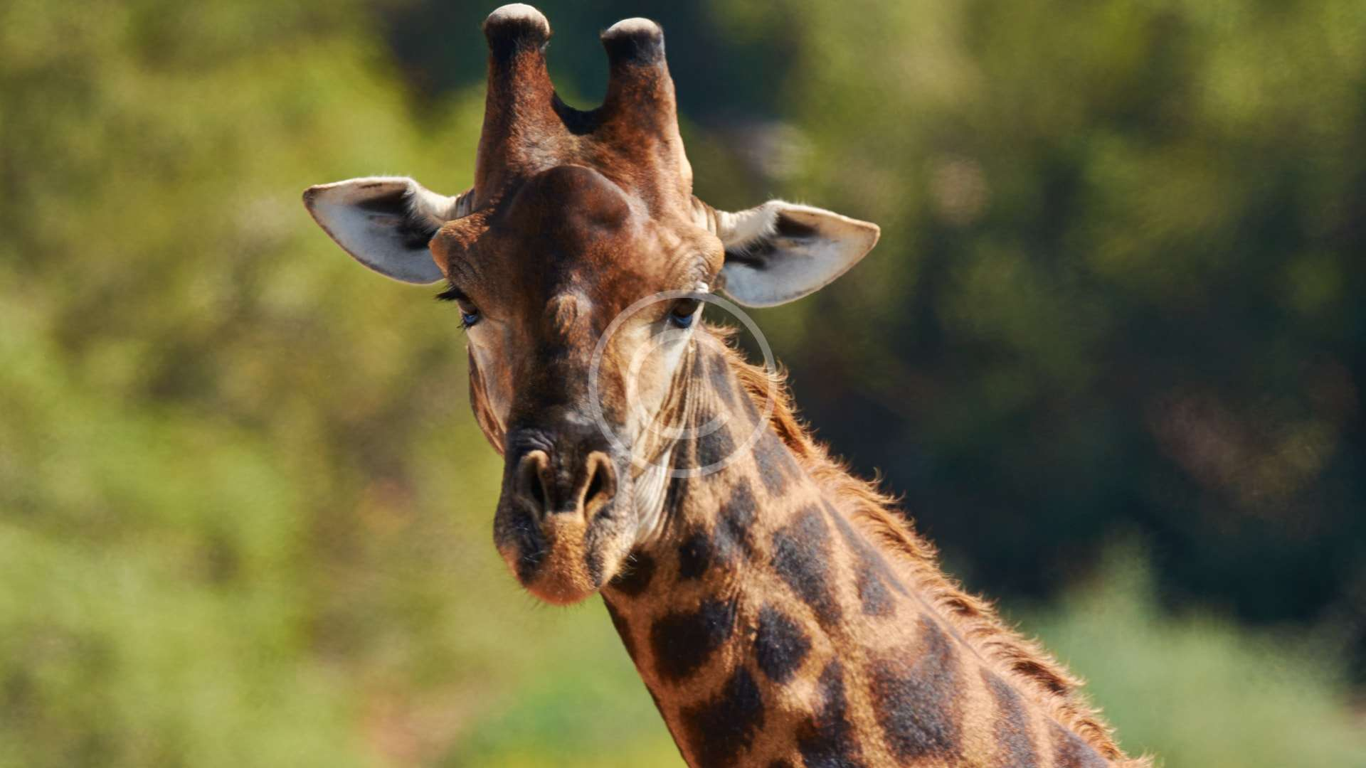 Giraffe Building